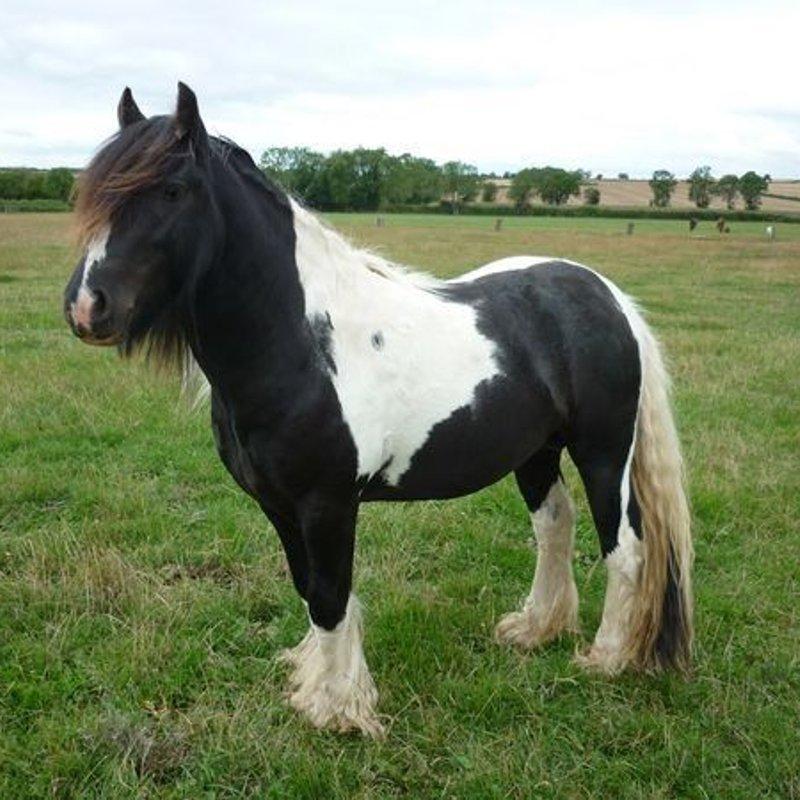 Don't Be Left Feeling Horse!