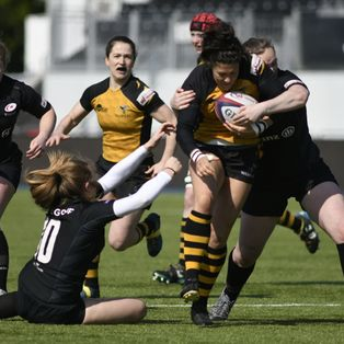 Hardworking Wasps fall to semi-final defeat