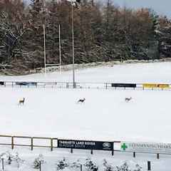 At least the pitches were used by someone on Saturday!