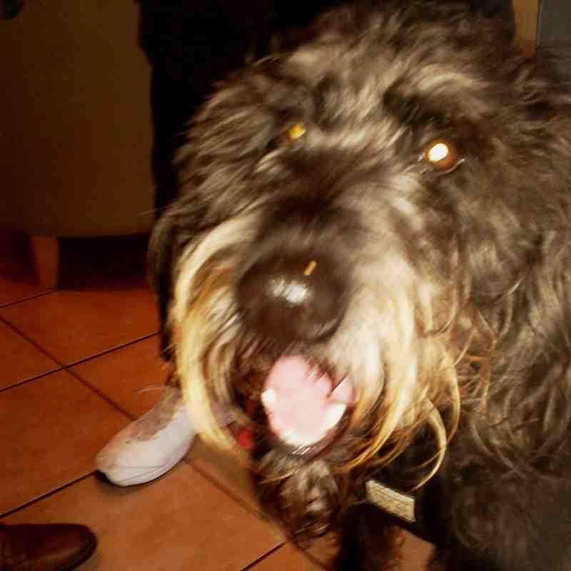 Lichfield Dog
