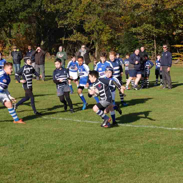 Minis & Youth fixtures Sunday 28th Jan