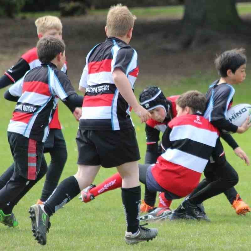 Lasswade Minis at Dalkeith RFC Minis Tournament 15.05.16