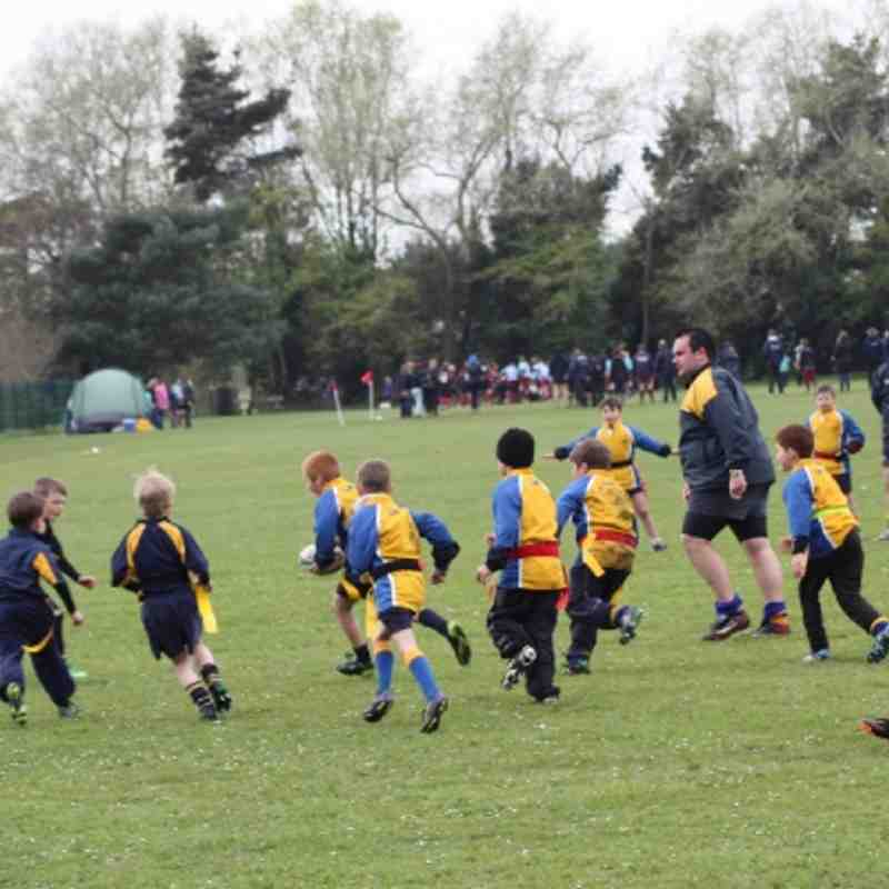 Under 8s tournament Poole RFC 140412