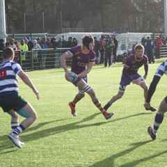 Marr Rugby round-up:   All systems are Purple and Gold as new season approaches