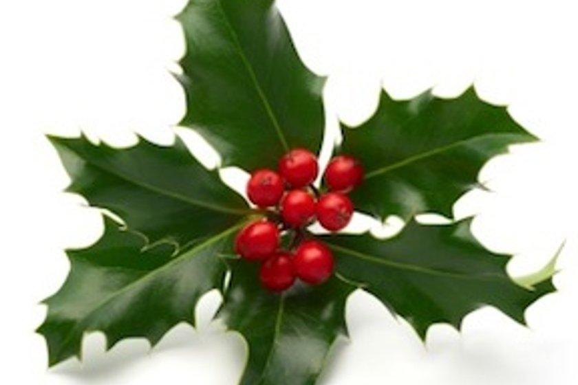 Christmas food hampers: Volunteers needed!