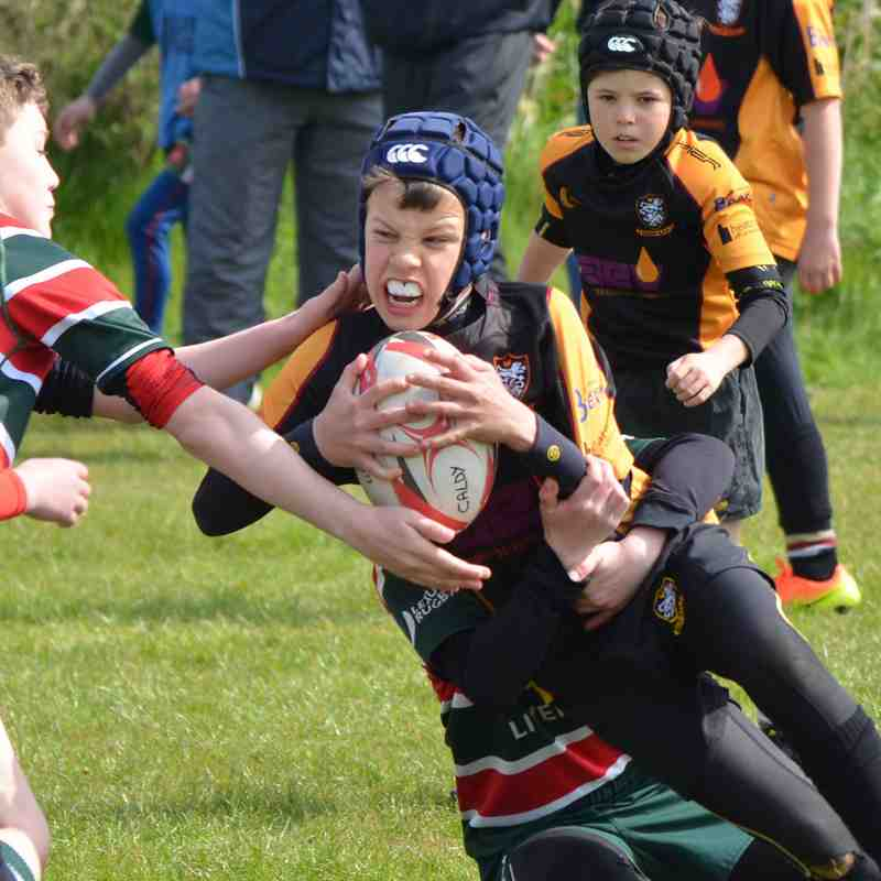 Under 9's Hoylake Rugby Festival  - 30.04.2017