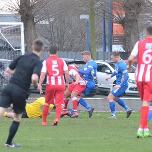 Tulips And Romulus Share The Spoils