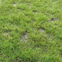 Enfield Town v Wingate & Finchley - GAME OFF AND NEW DATE