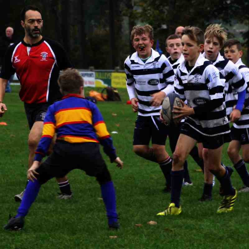 SRFC Under 12s v Old Halesonians - Sunday 30 October 2016