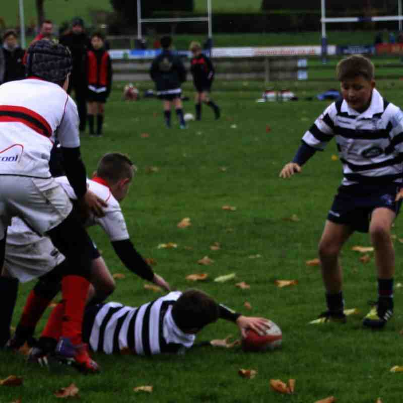 SRFC Under 12s v Bromsgrove - Sunday 6 November 2016