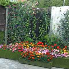 Selby In Bloom Award