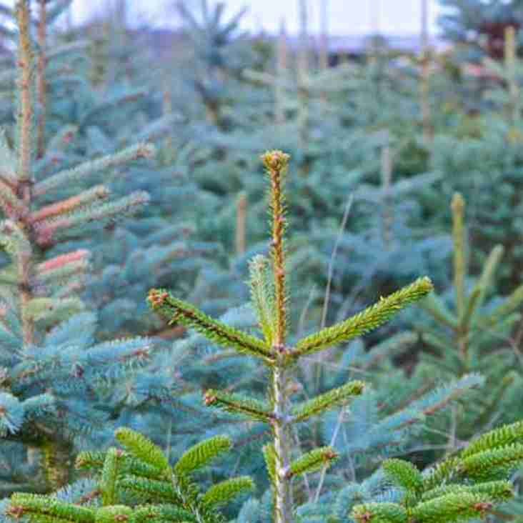 Christmas Trees available through the club