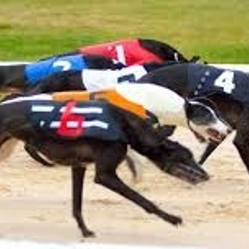 Greyhound Racing Friday 21st July