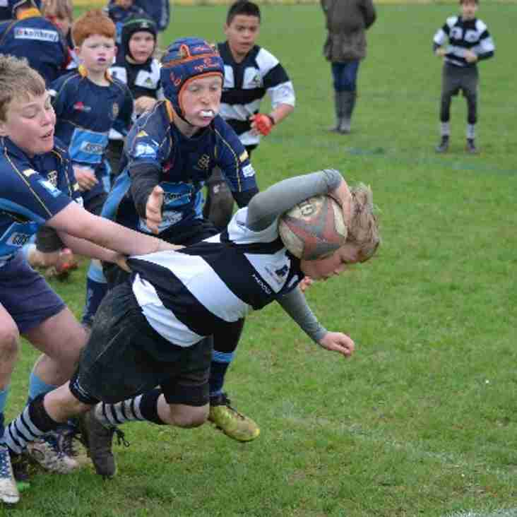 U11s run rampant at the Surrey A's