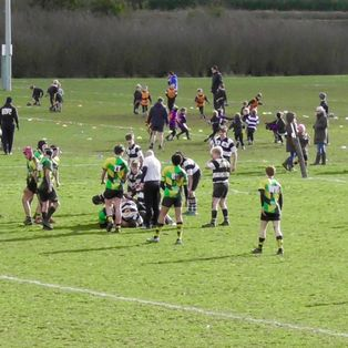 Festival Rugby for the U15s at Farnham