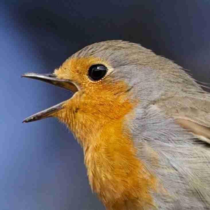 Robins v Robins