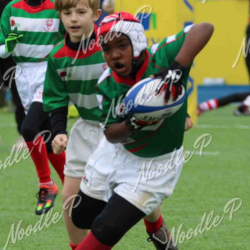 U10s Saracens Tournament 26.03.16
