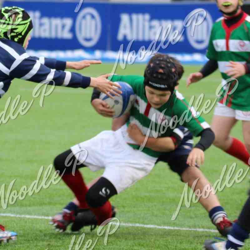U10s Saracens Tournament 26.03.16