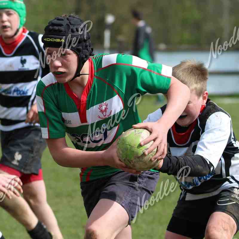 U13's v Harpenden RFC - 24th April 2016
