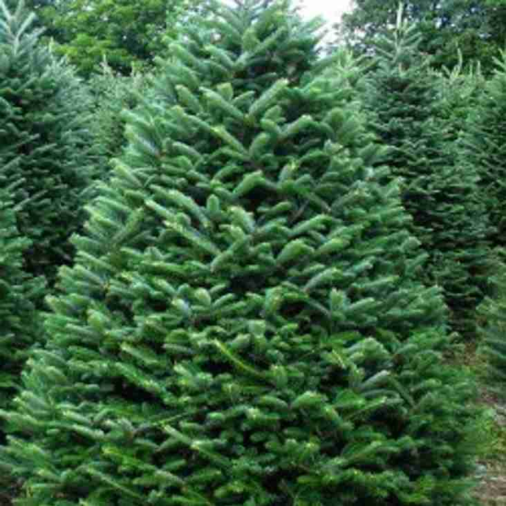 CHRISTMAS TREES 2nd & SUNDAY 3rd. 10am - 2pm PRICES START FROM £30