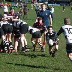 Perthshire U/13 beat Dundee High 19-8 on 25/03/17 (Pics by Jean-Louis)