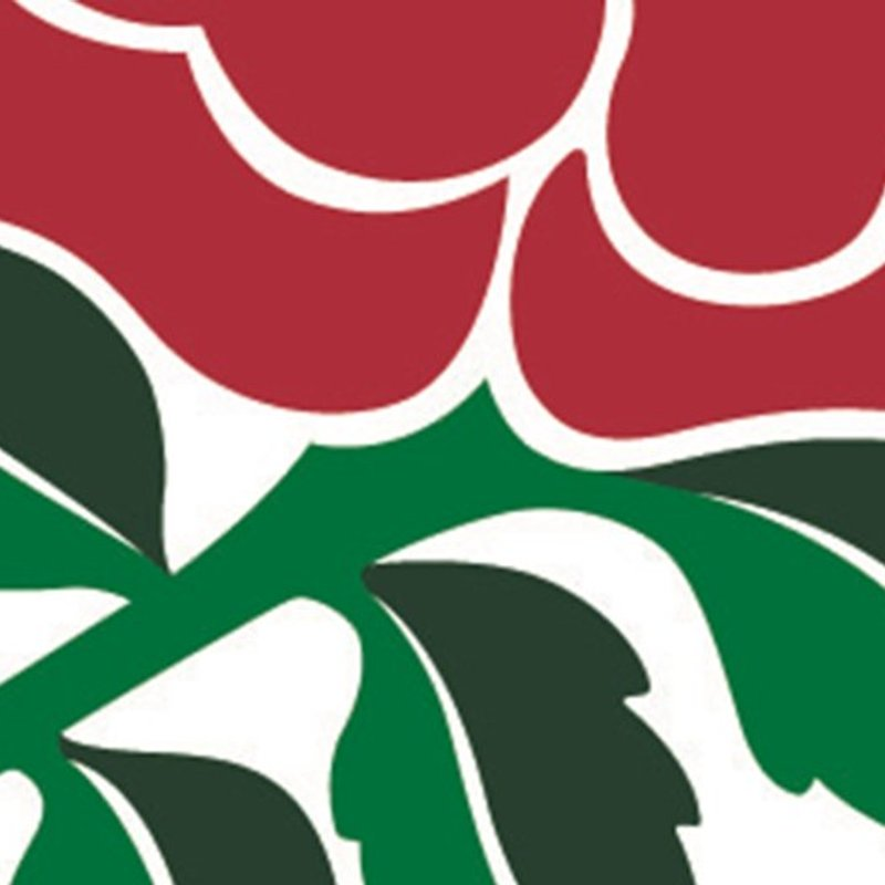 RFU's Young Rugby Ambassador programme for 14-25 year olds