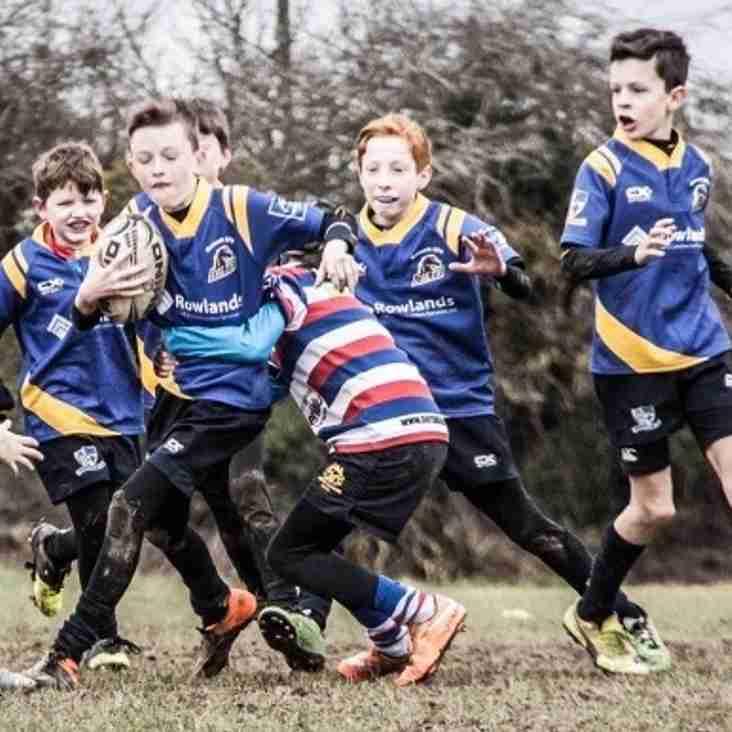 Mini Rugby's Back !