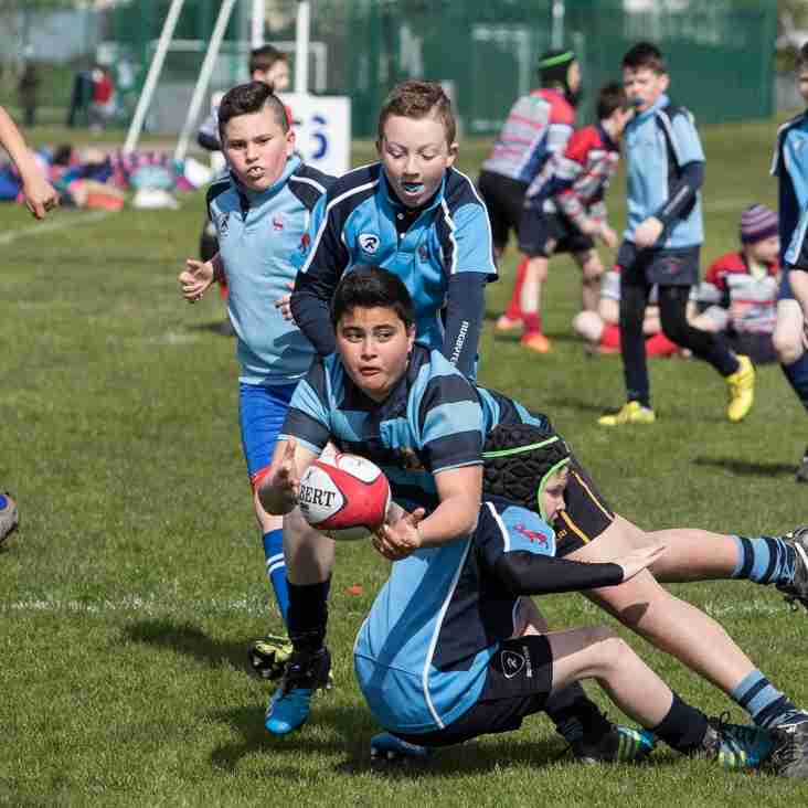 Seapoint Mini Rugby Festival 2016