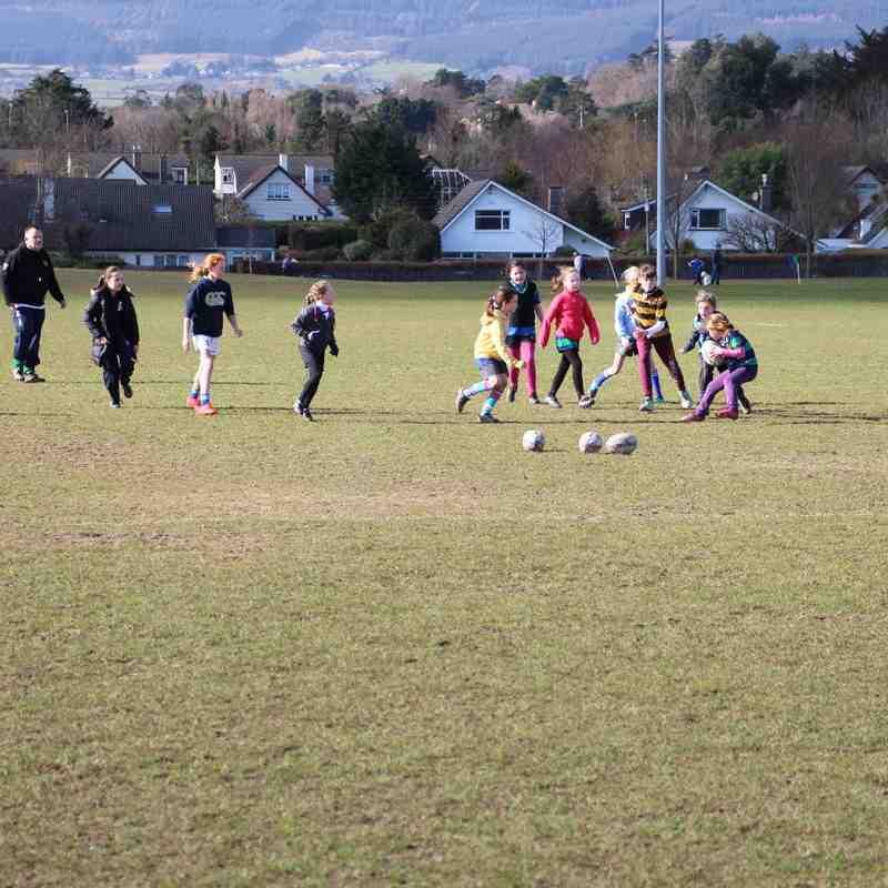 Seapoint Mini Girls versus Wicklow RFC