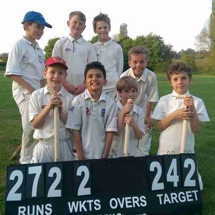 Junior Cricket plans for 2019