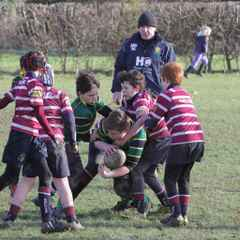 Shelford hosted a busy morning of rugby...