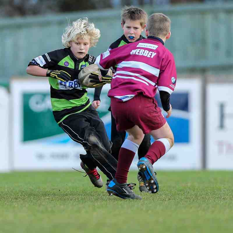 Guernsey Rugby Academy U11/12 v Amersham 2015