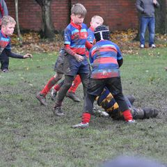 Westoe Tigers vs Durham 06/11/16 by Lorraine Storey