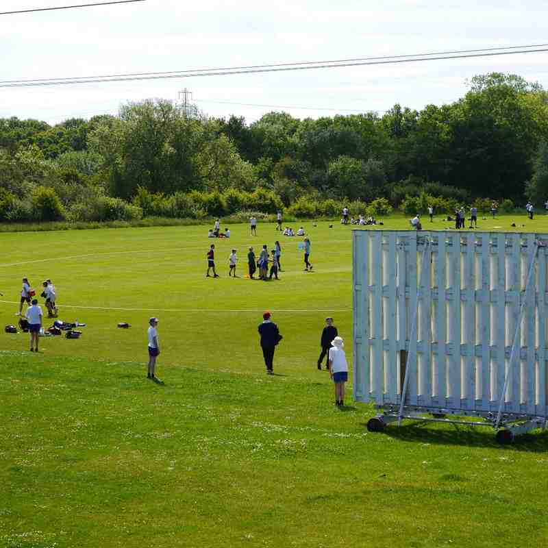 Kwik Cricket Festival 2015