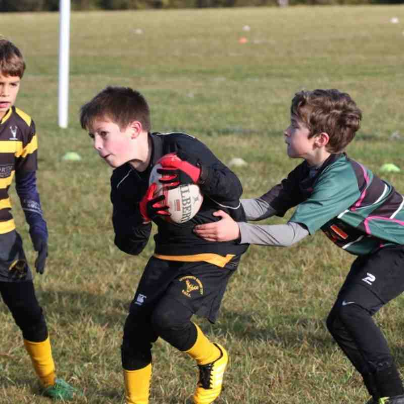 Under 8's v Letchworth 13th Nov 2016