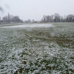 Snowy Beef Meadow
