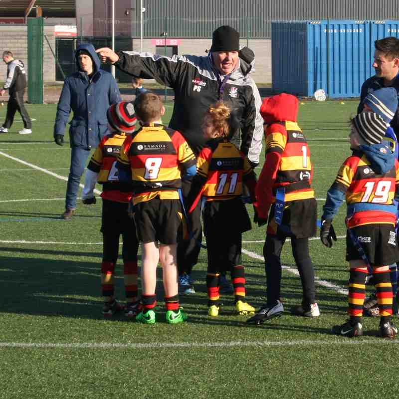 Sale Sharks U8's tournament