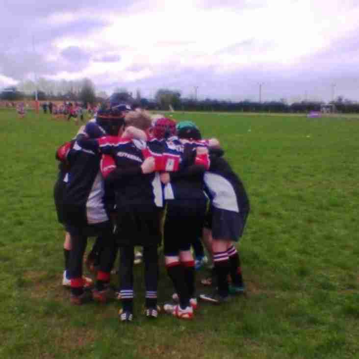 End of Season Mini Rugby Festivals