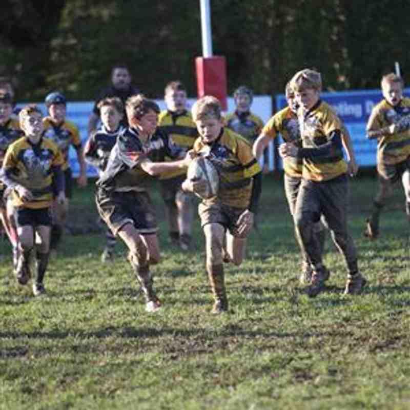Crowborough Festival Under 12