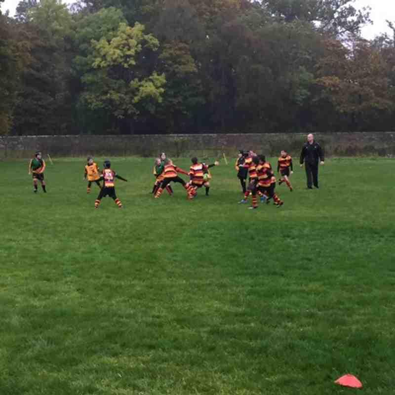 Harrogate rugby