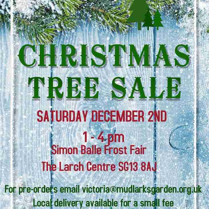 MUDLARKS - Christmas Tree Sale