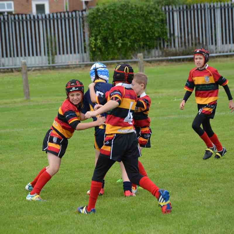 west houghton tiger u9s v pilks u9s