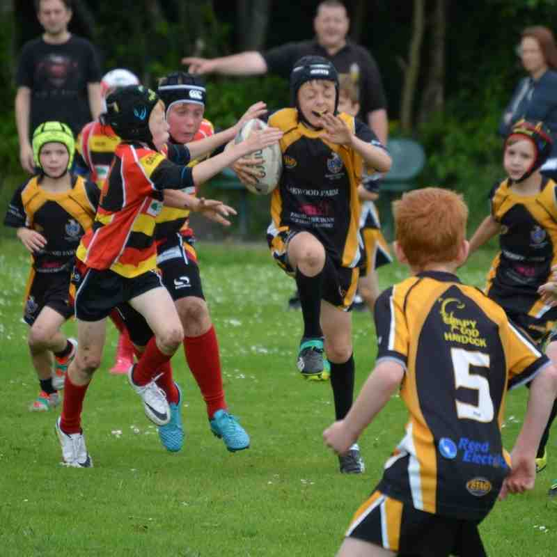 haydock v pilks under 10s