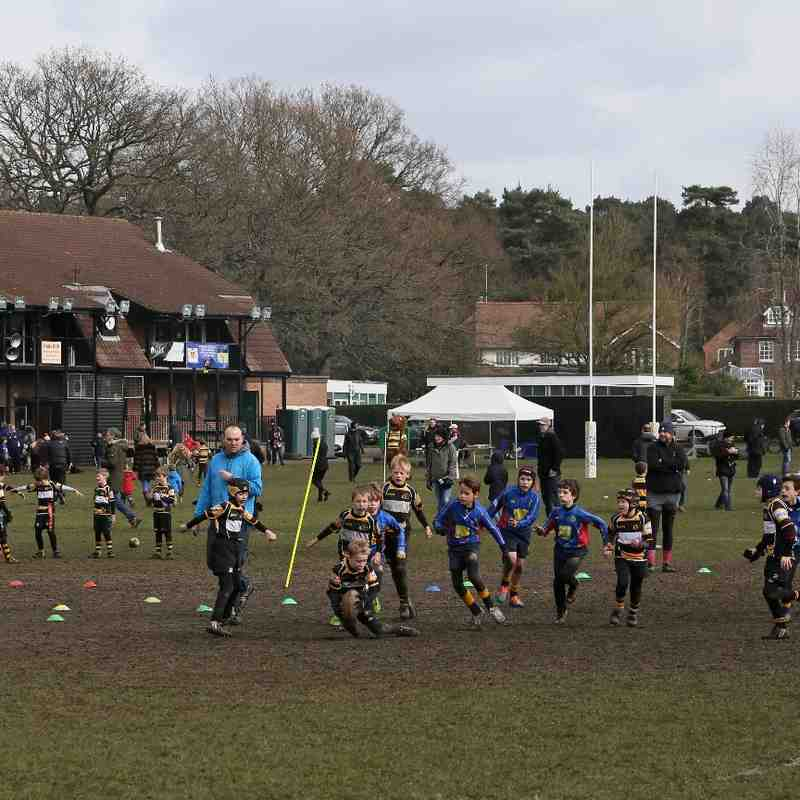 Camberley RFC Festival March 2016