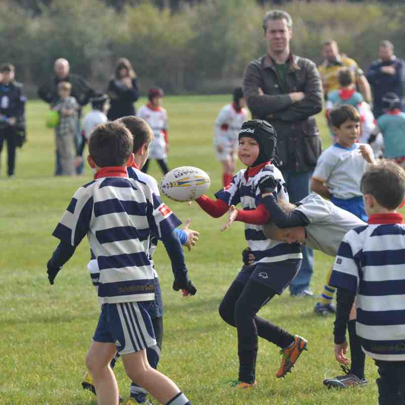 U9 v Worcester Warriors Tournament - Sat 22 Oct 2016