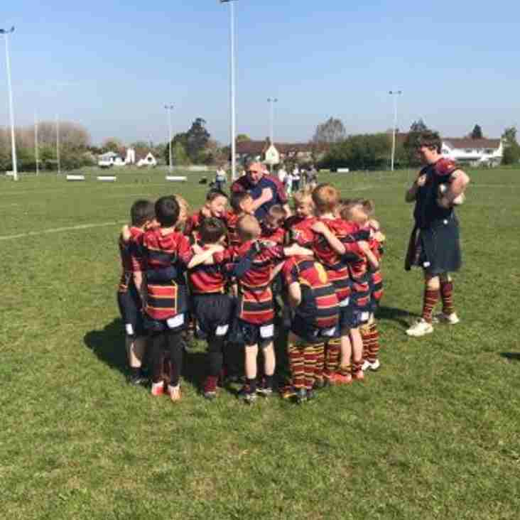 Minis Rugby Coaching Opportunity