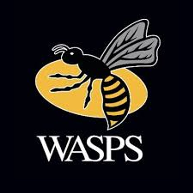 Wasps come Training!