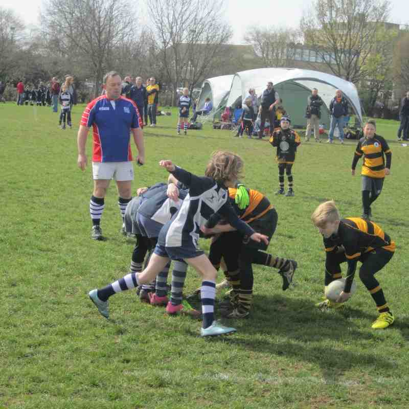 Chelmsford 40th Mini Festival 100416
