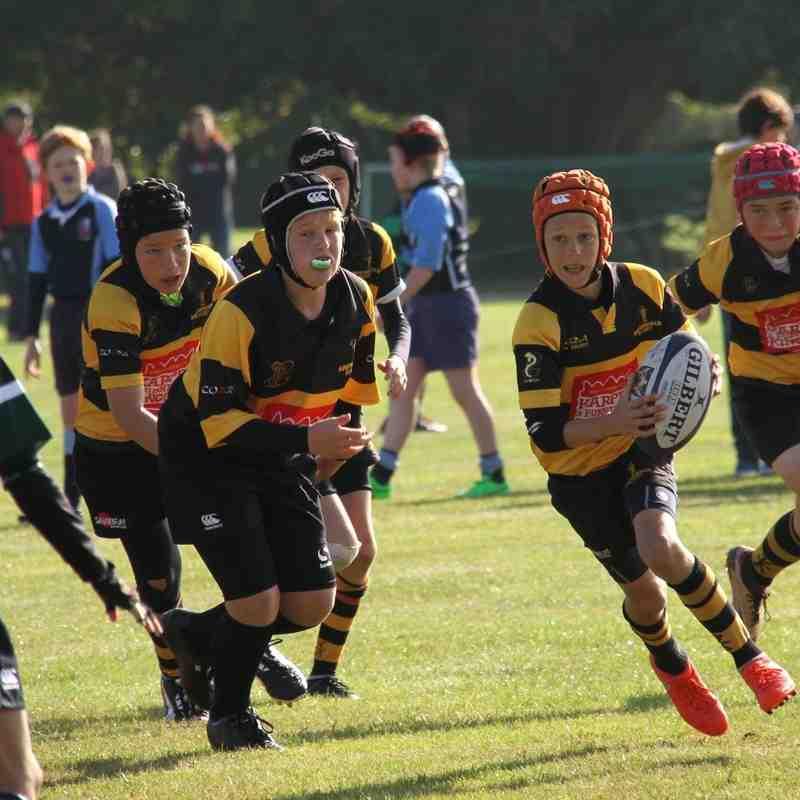 U12's Finborough Tournament 2.10.16