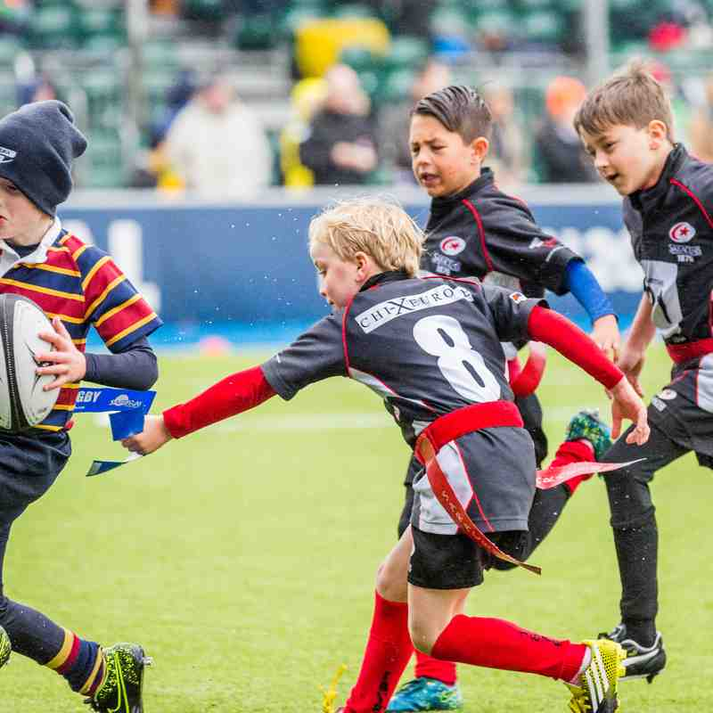 Under 8s at Allianz Park 12 November 2016